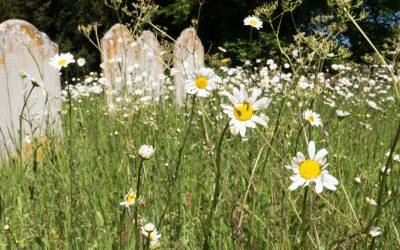 Praise for Coddenham Churchyard