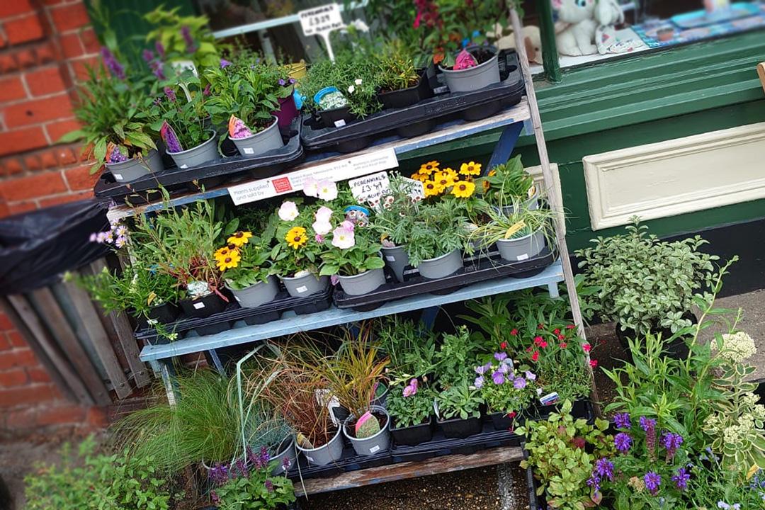 Coddenham_Village_shop_summer_plants