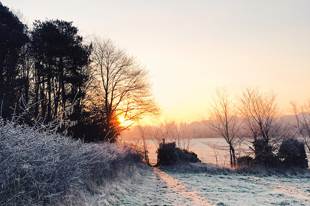 frosty hedgerows going into an orange sunrise