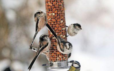 Get Ready for the RSPB Big Garden Birdwatch with Coddenham Community Shop