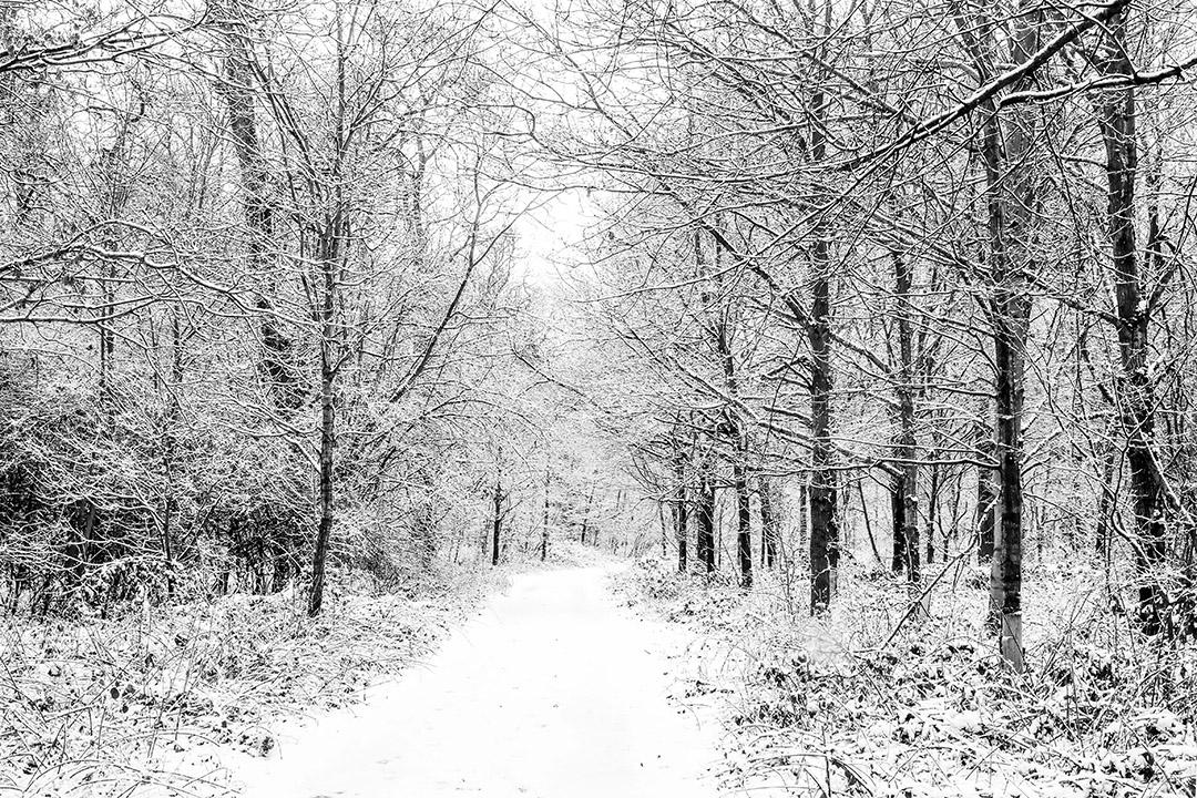 coddenham_wood_walk_in_the_snow