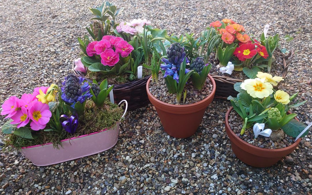 Floral Gifts for Mother's Day at Coddenham Community Shop