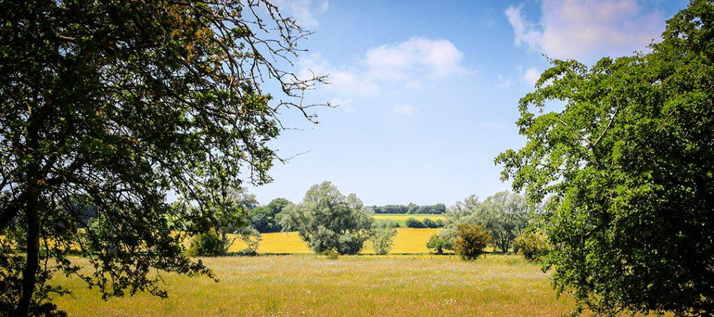 A field of Poppies in Coddenham Suffolk