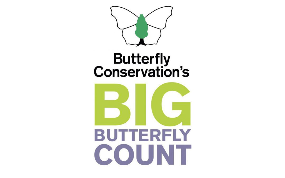 The Big Butterfly Count is ON in Coddenham