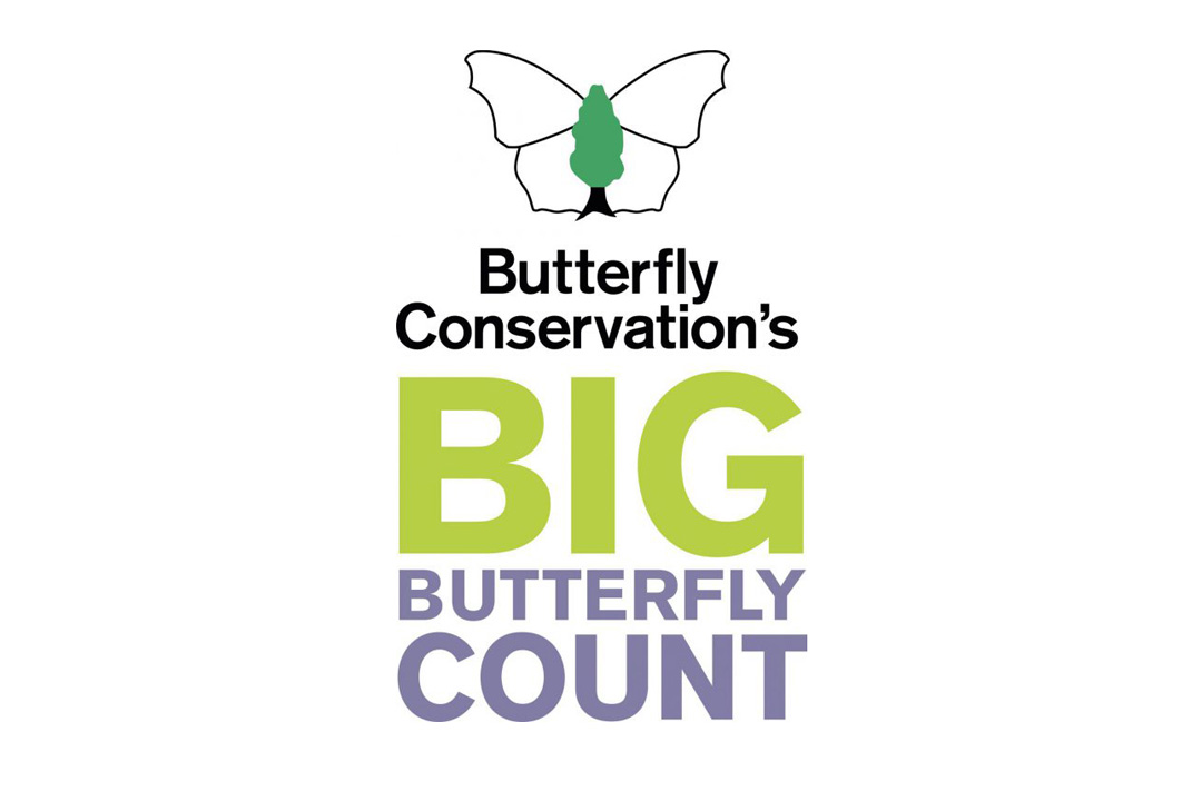 The Big Butterfly Count Suffolk